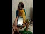 интерактивный попугай танцует под glee cast let it snow